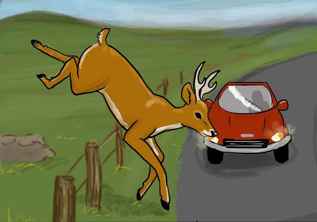 Deer jumping into roadway in front of car. Courtesy the Kansas Highway Patrol