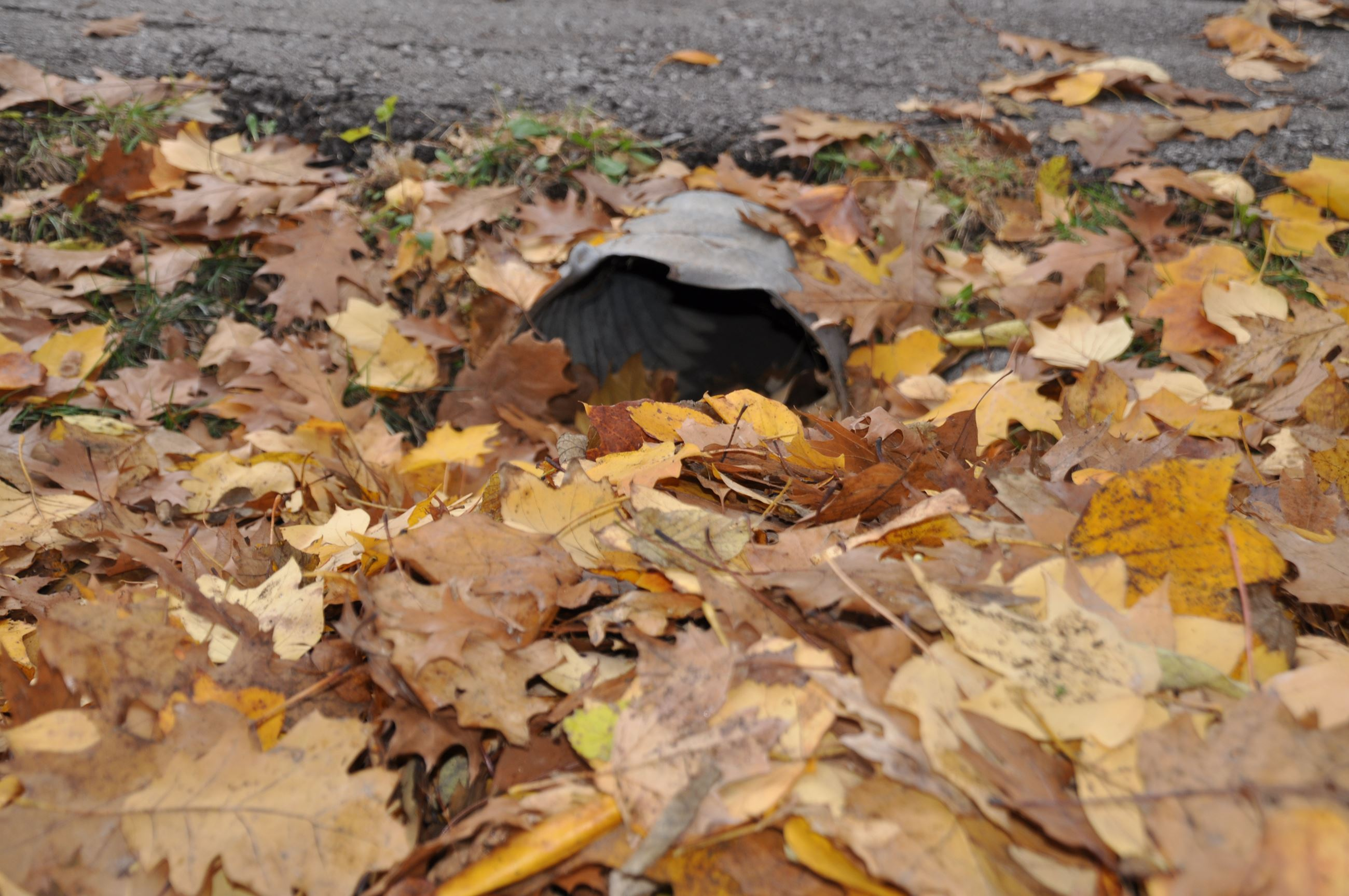 Leaves fill up a driveway culvert.
